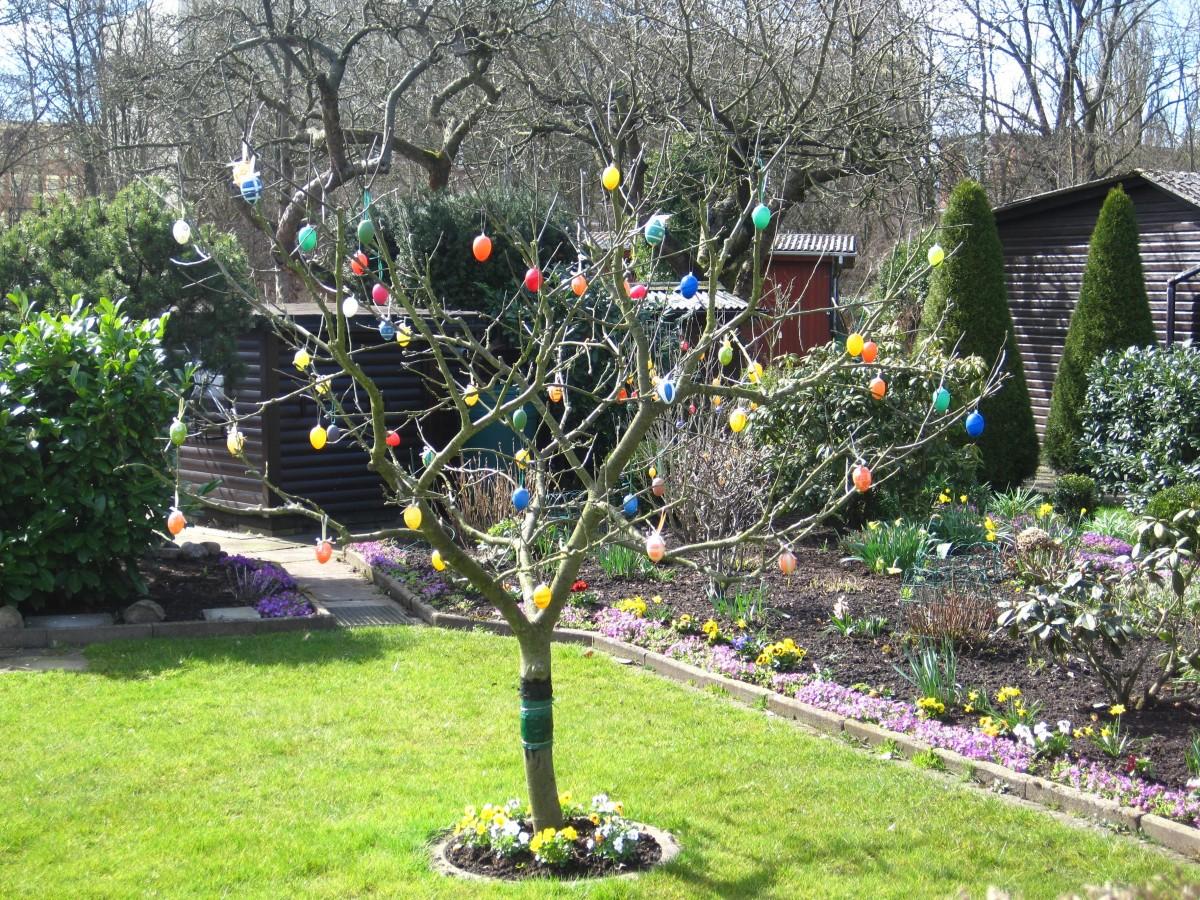 Free Images : plant, lawn, flower, spring, backyard, botany, flora ...