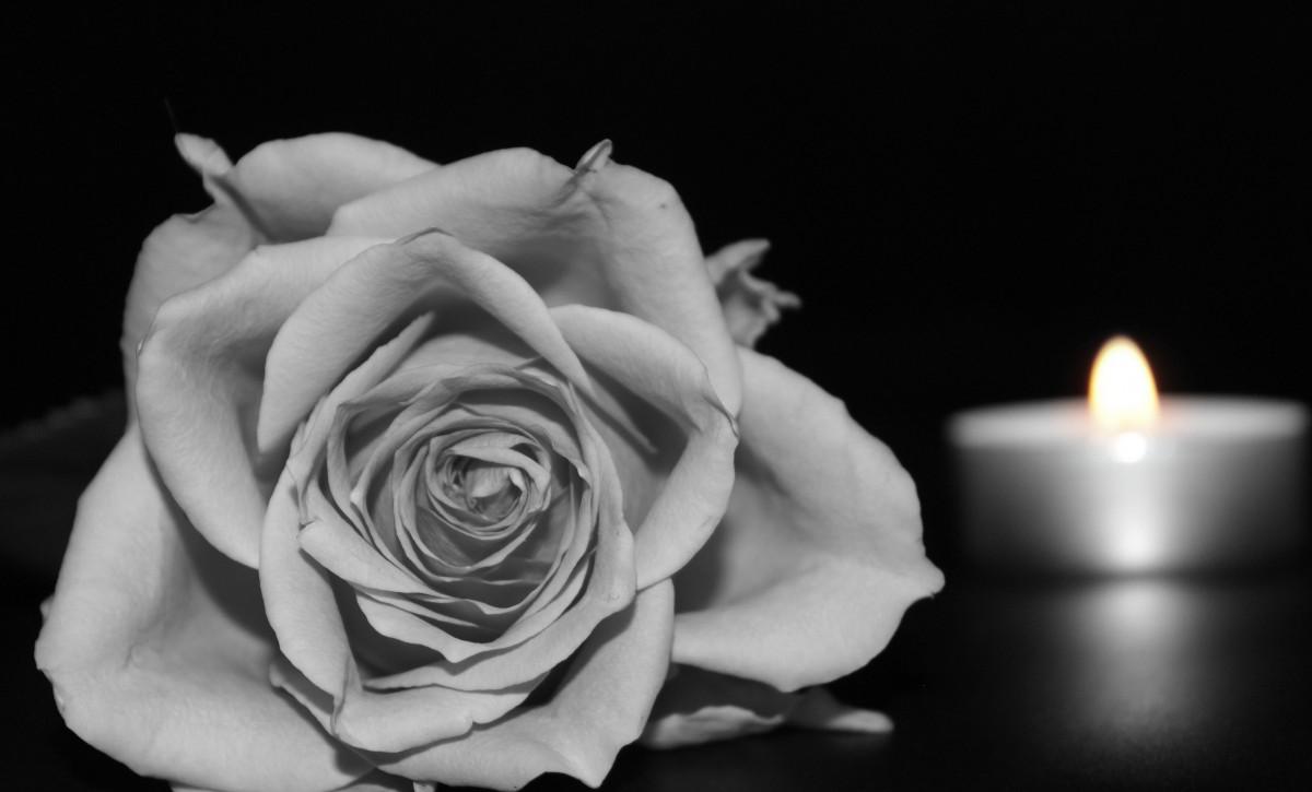 Fotos Gratis : Flor, En Blanco Y Negro, Fotografía