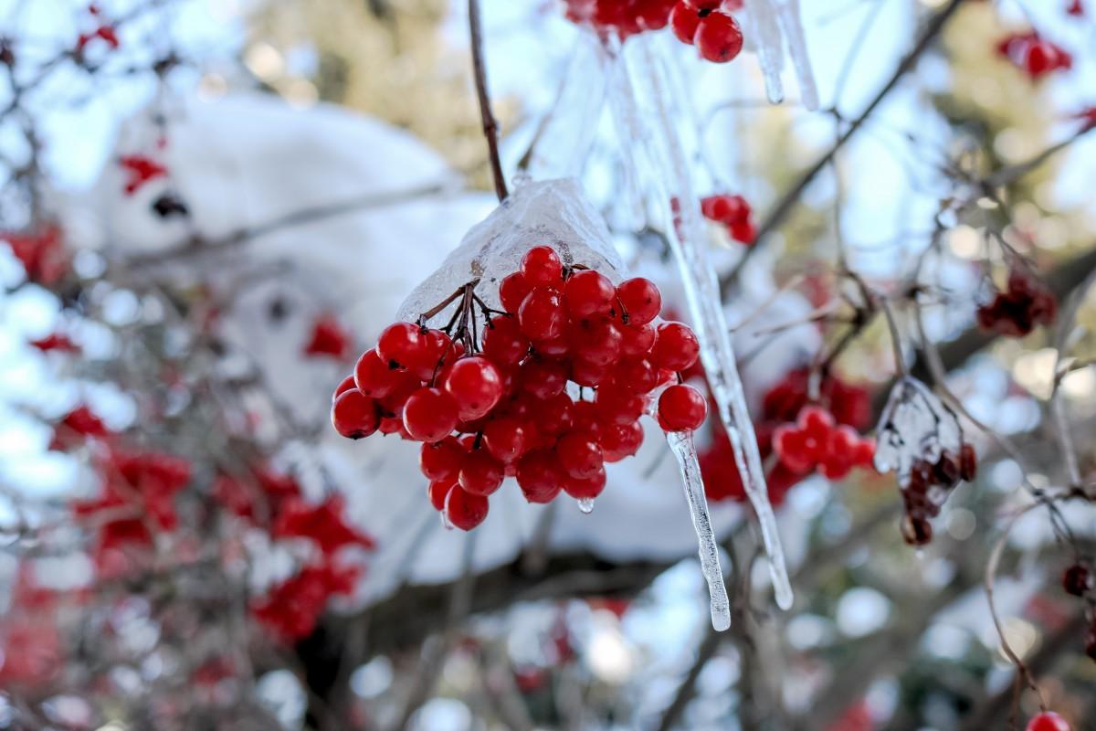 картинки деревьев и кустарников в зимнем наряде