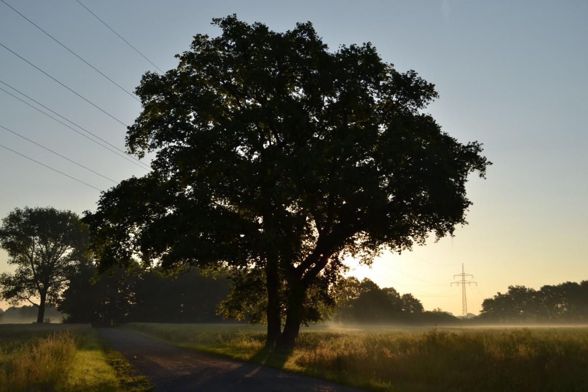 Kostenlose Foto Baum Natur Wald Ast Licht Wolke