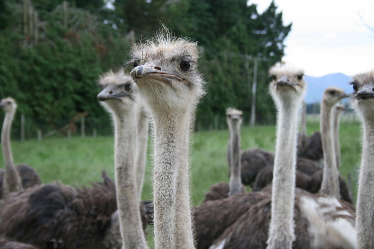 голоду, прикольные фото страусов это только