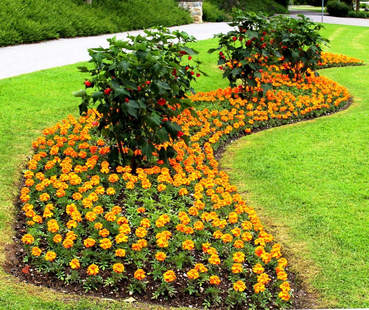 for Ornamental trees for flower beds
