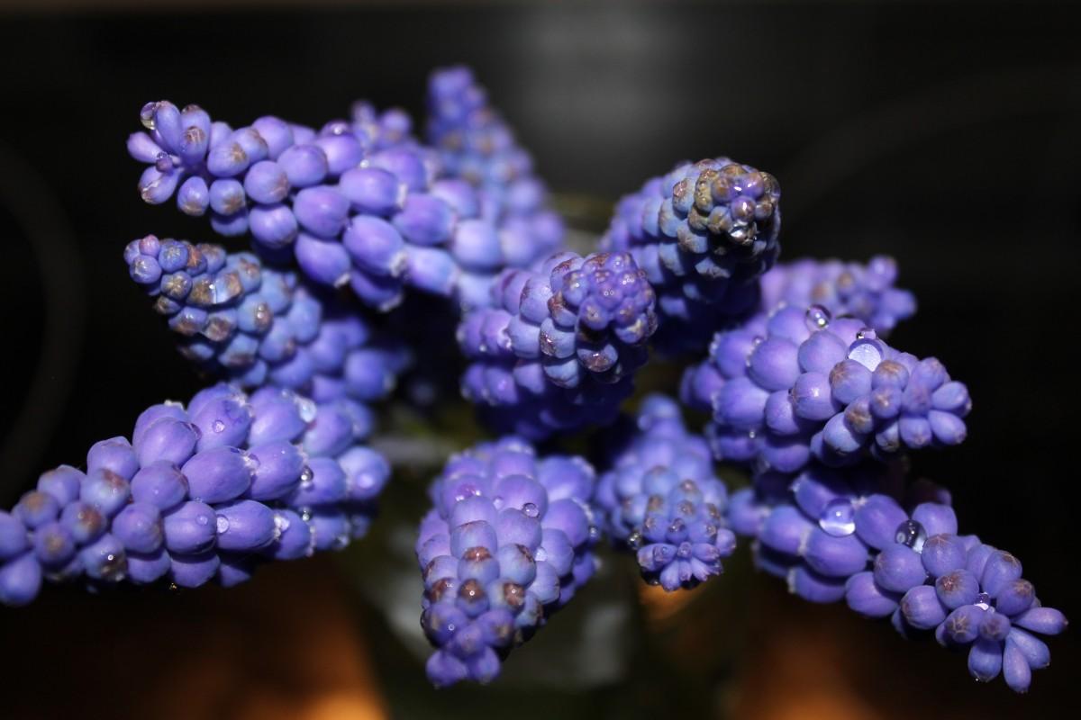 kostenlose foto natur bl hen fotografie blume lila bl tenblatt botanik blau flora. Black Bedroom Furniture Sets. Home Design Ideas