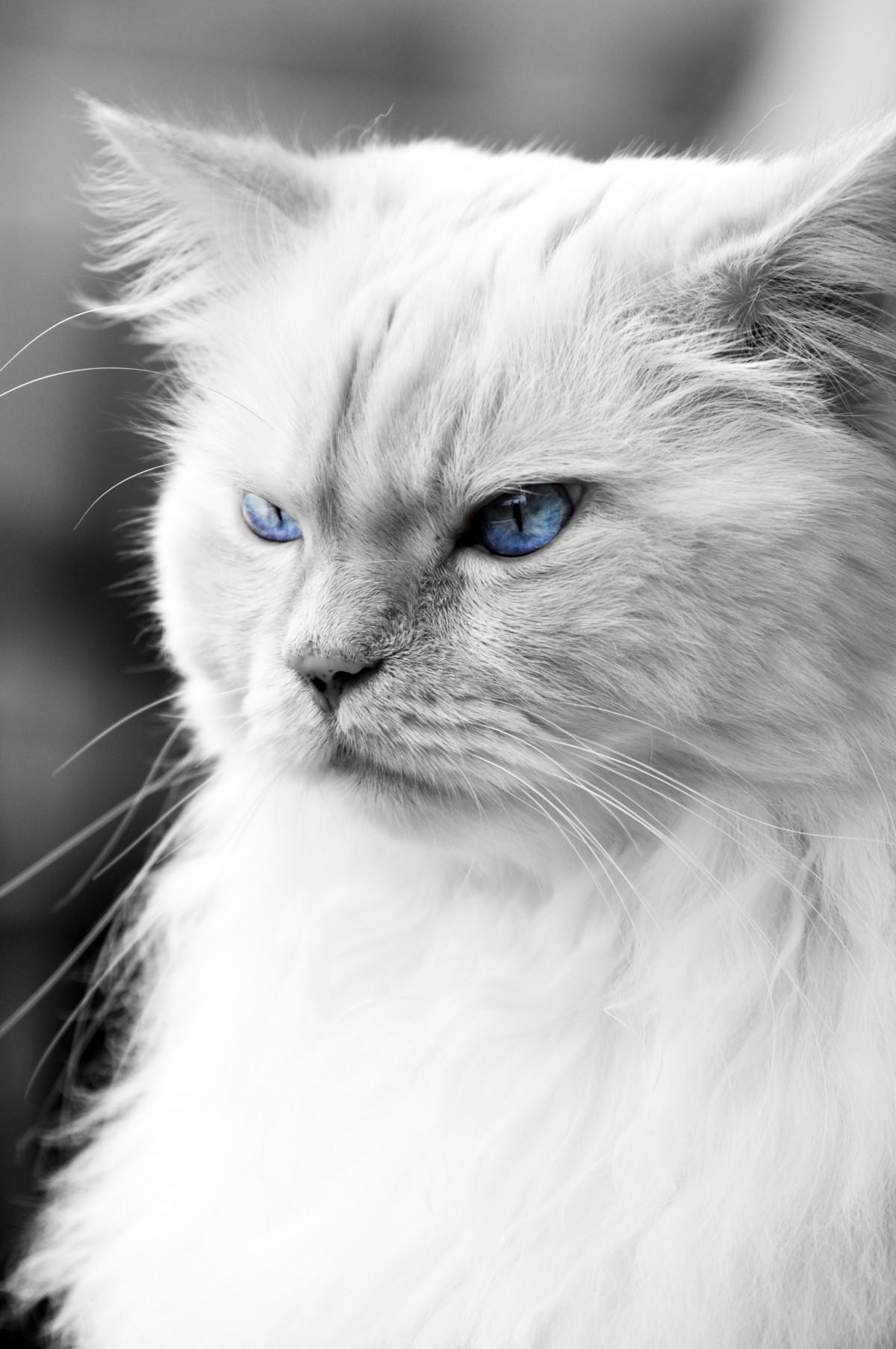 manhattan cat specialists