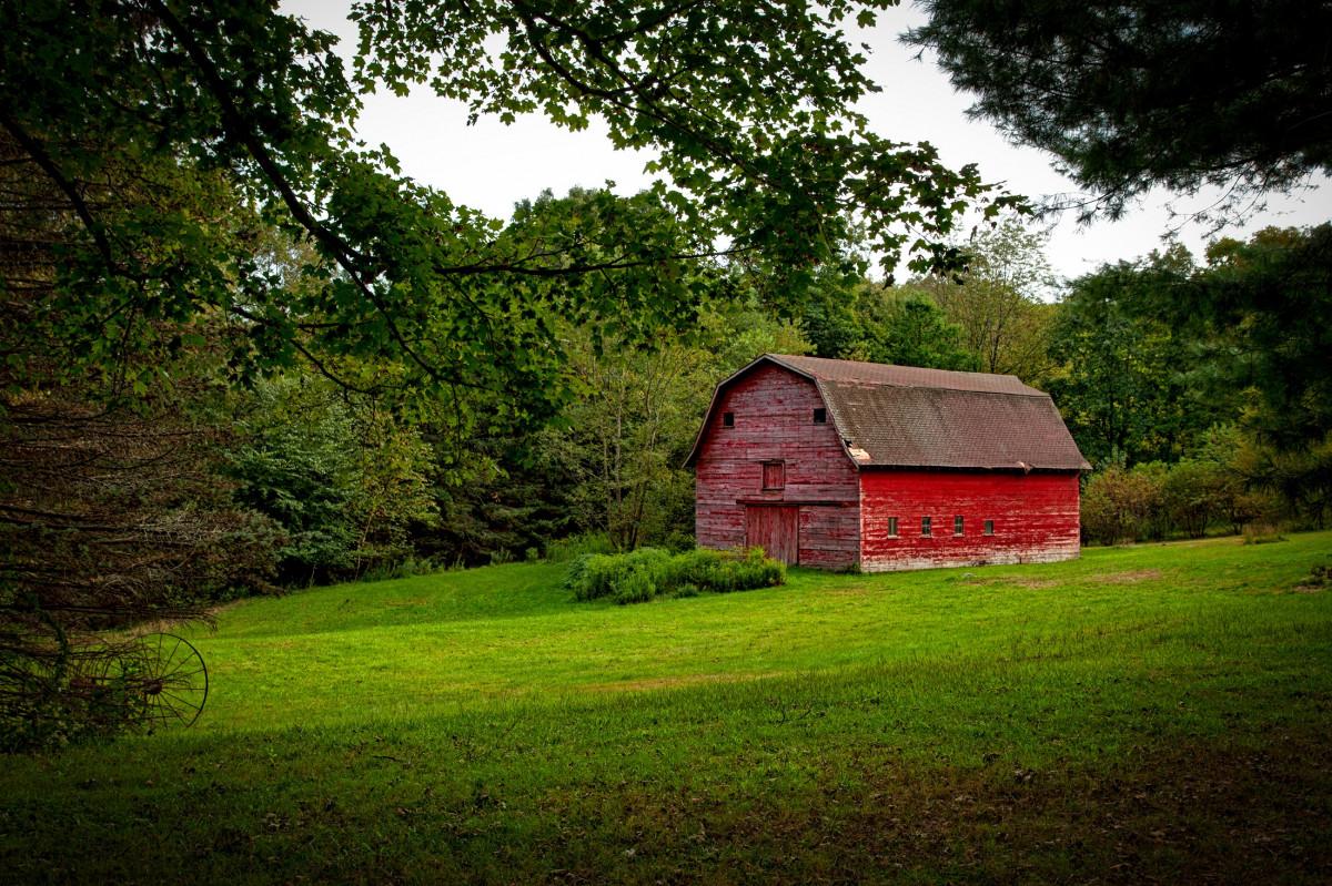 картинки сарая на ферме музы, знаменитый пианист