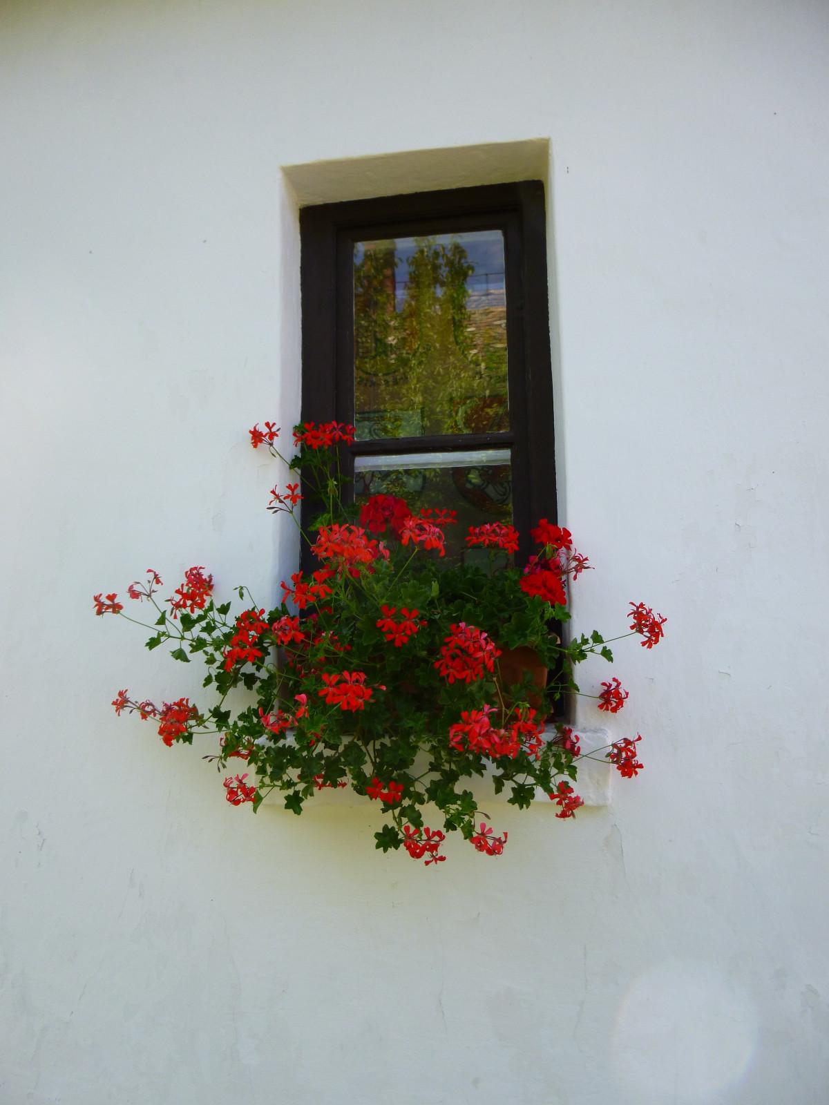Images gratuites plante fleur fen tre fleurs for Plante rouge de noel