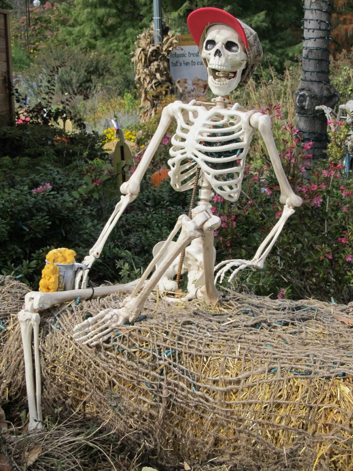скелета фотографии