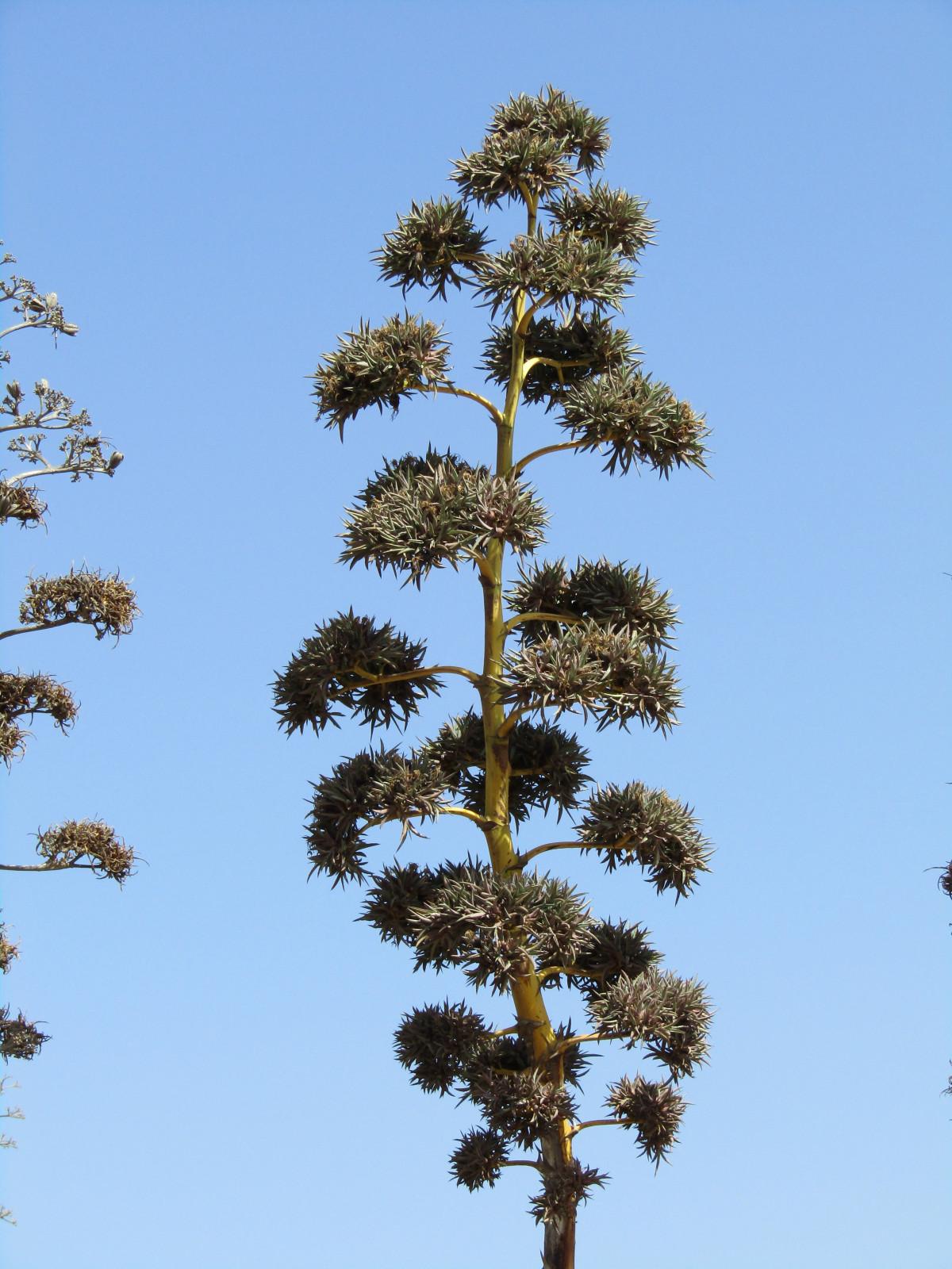 images gratuites arbre branche feuille fleur vert feuilles persistantes botanique. Black Bedroom Furniture Sets. Home Design Ideas