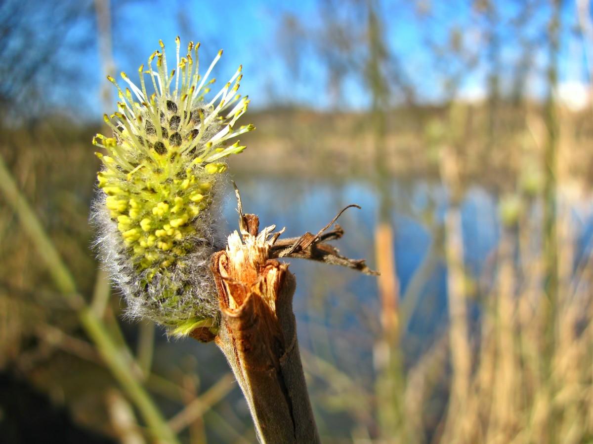 Images gratuites arbre la nature plante ciel lumi re du soleil feuille fleur surgir - Fleur du soleil ...