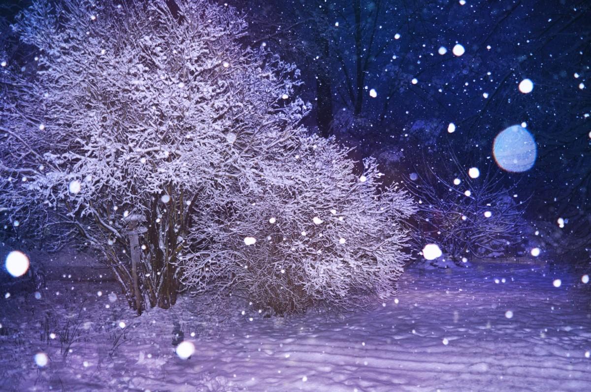 красивые картинки ночь зима снег цветения