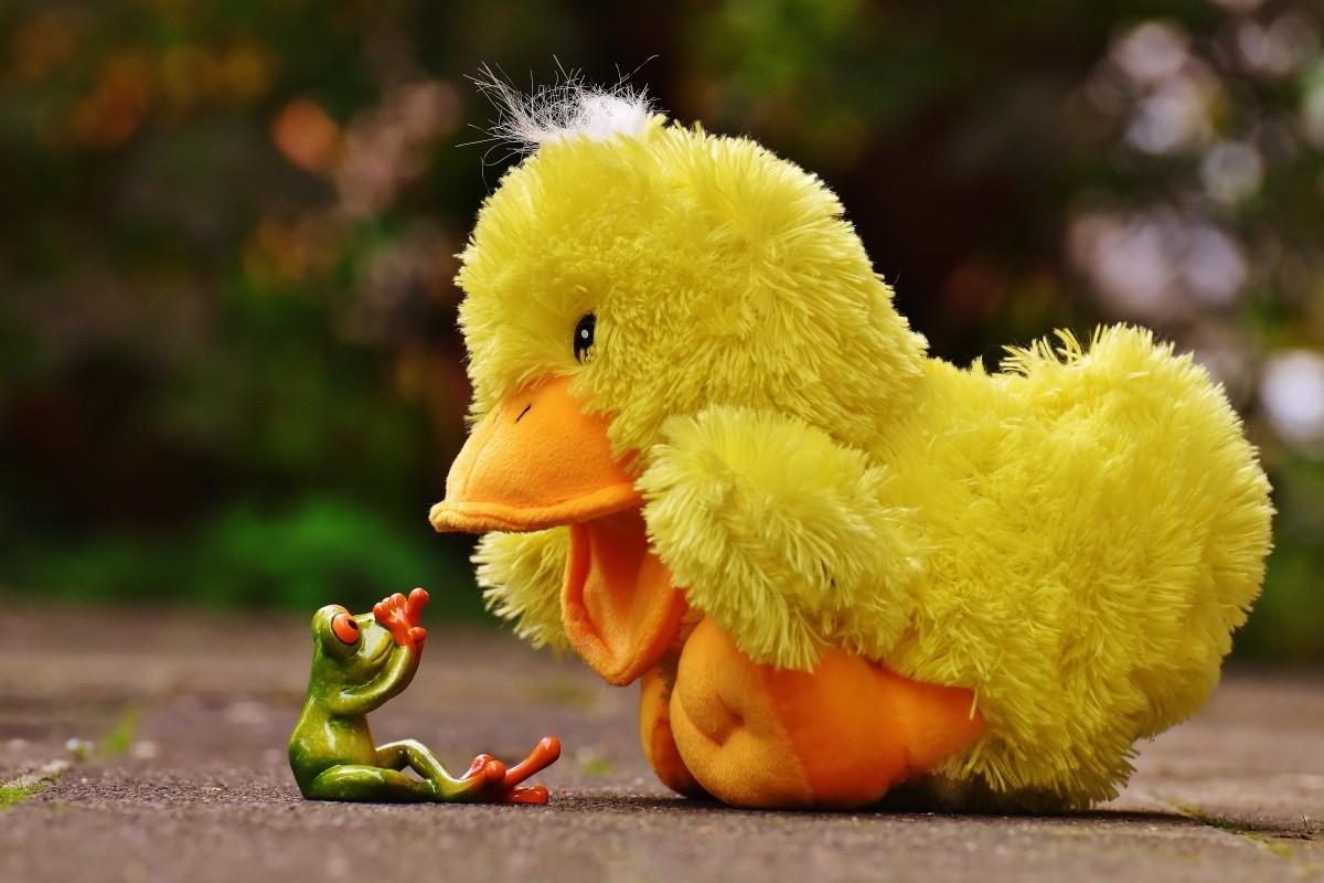 free images meadow flower cute beak yellow chicken
