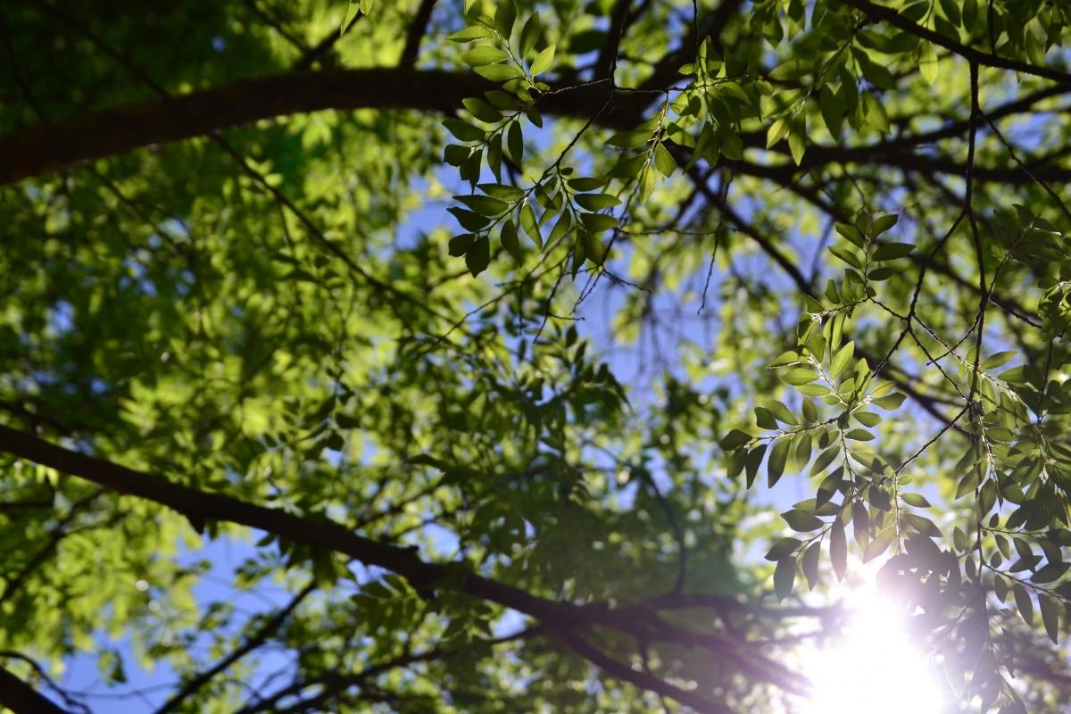 Kostenlose foto : Baum, Natur, Ast, blühen, Himmel, Sonnenlicht ...