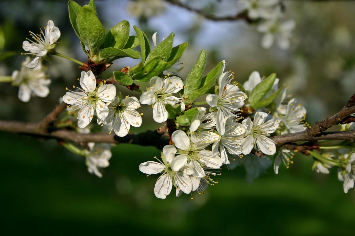 Что посадить на 6 сотках: деревья, растения, кустарники и цветы 32