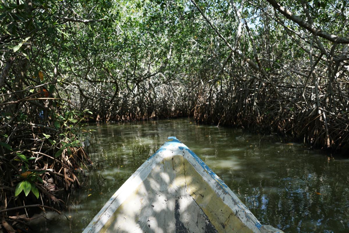 manglares reserva de la biosfera de ria celestún yucatán méxico