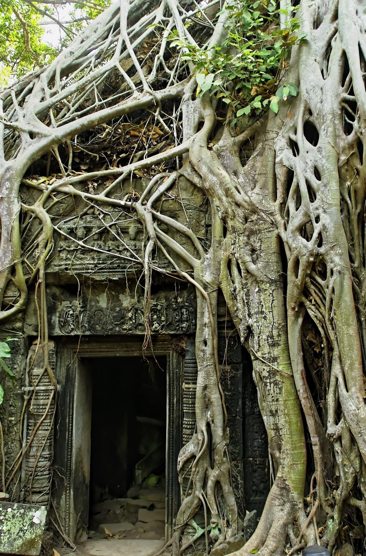 Images gratuites arbre branche plante fleur tronc for Plante jungle