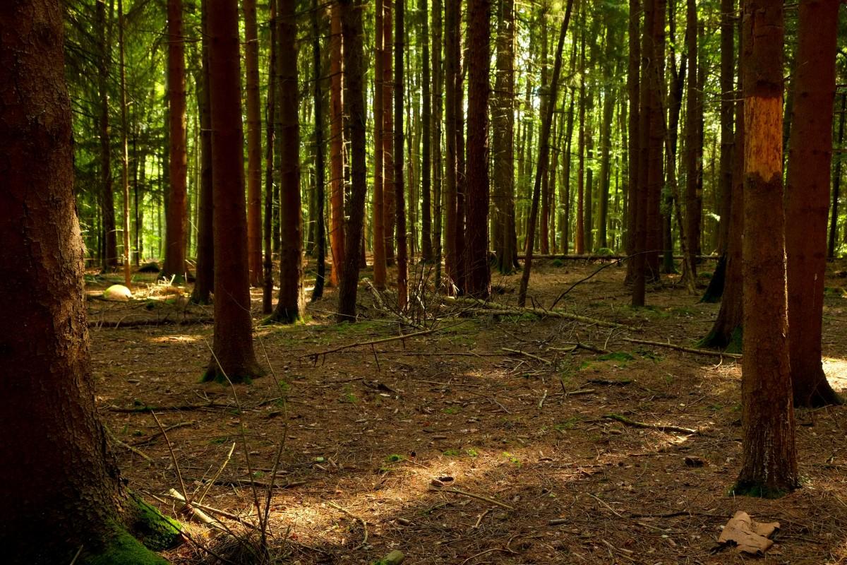 Free Images Tree Wilderness Sunlight Leaf Walk