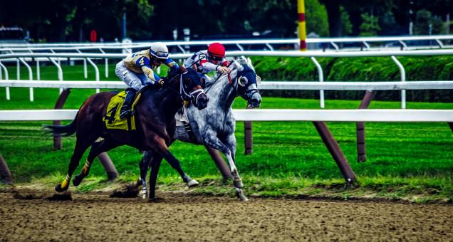 Piste, cheval, étalon, course, les chevaux, des sports