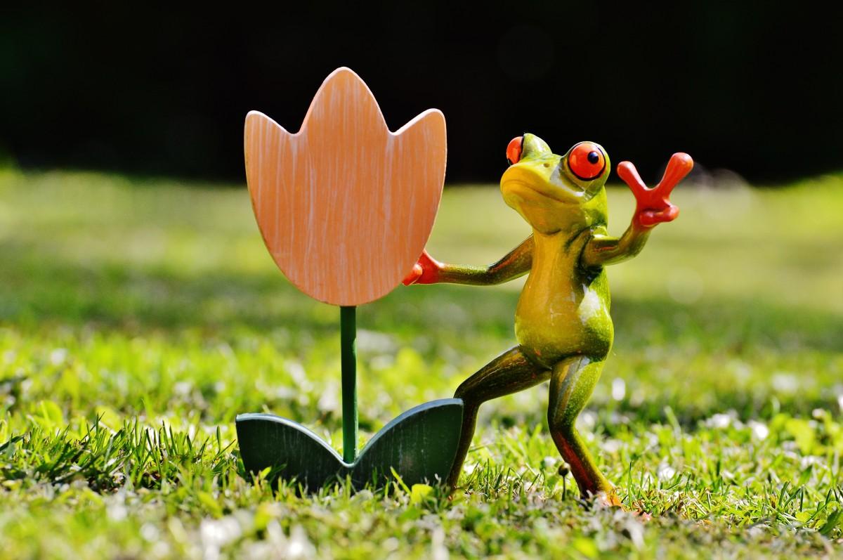 Картинки растений смешные