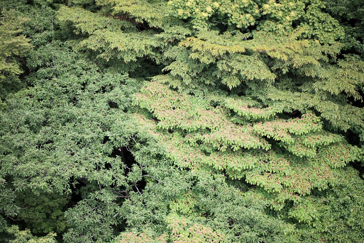 Images gratuites arbre plante feuille fleur mod le for Arbres a feuilles persistantes