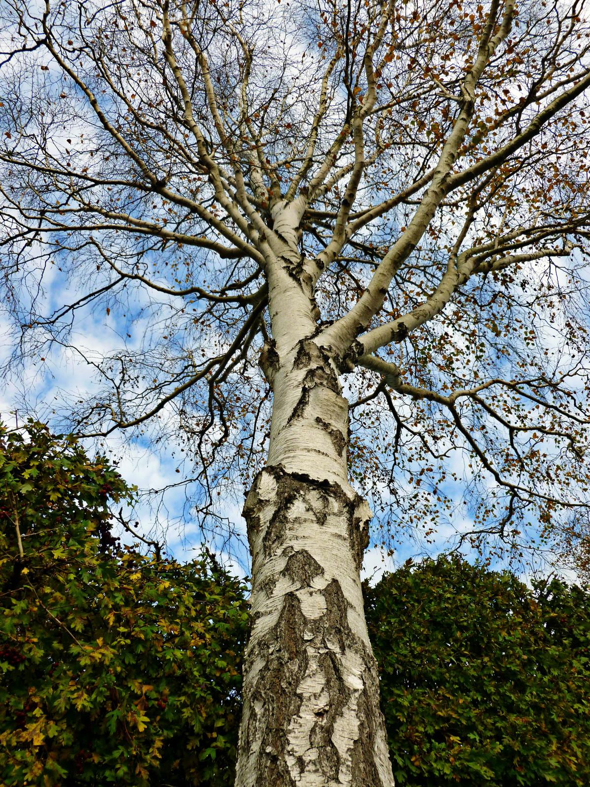 Kostenlose foto : Baum, Natur, Wald, Ast, Holz, Blatt, Blume ...
