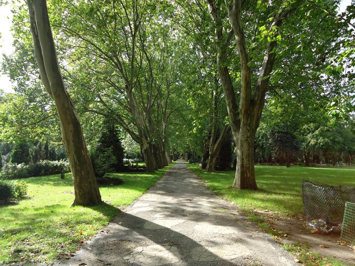 Images gratuites arbre for t piste pelouse vert for Arbres de jardin