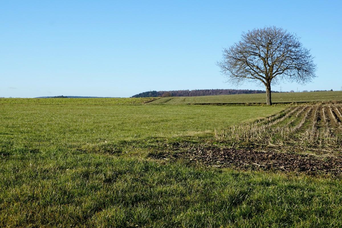 Free images tree field asphalt crop soil for Landscape trees