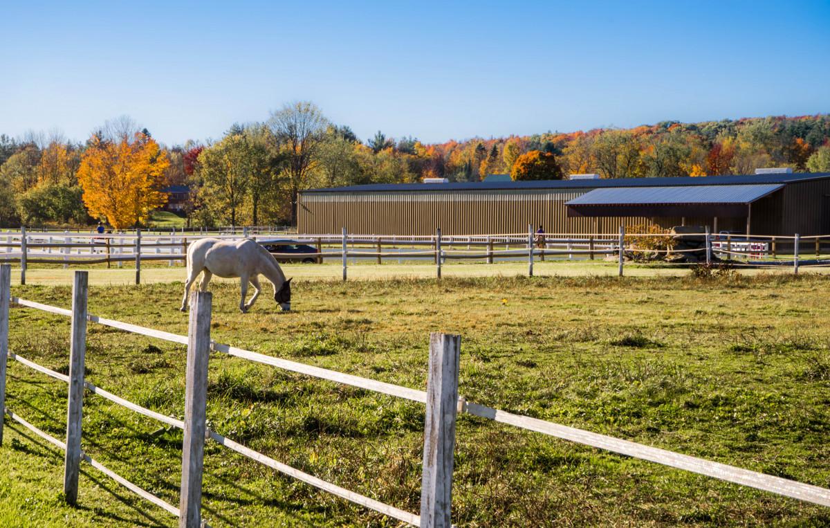 piquet clôture pour chevaux