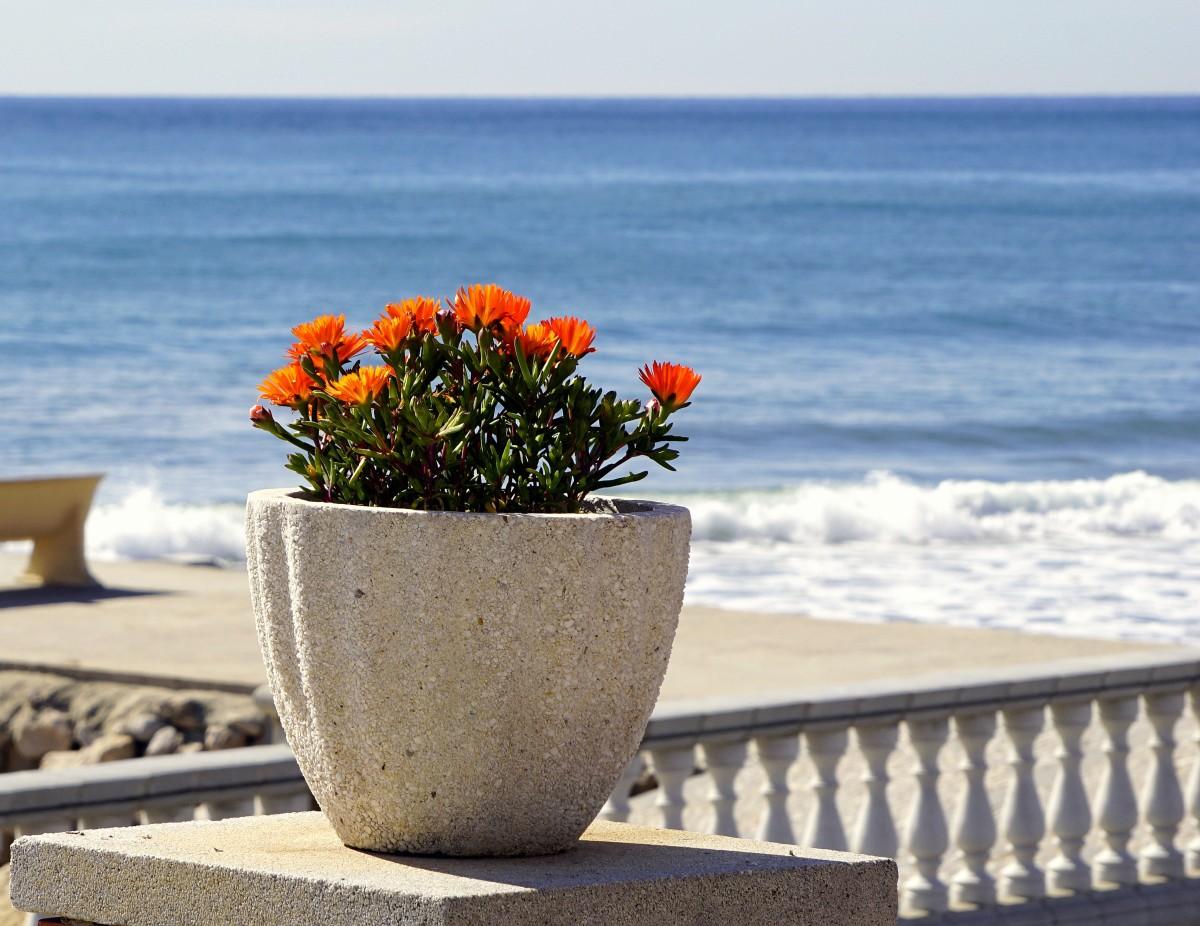 открытки цветы на берегу океана соединительная часть между