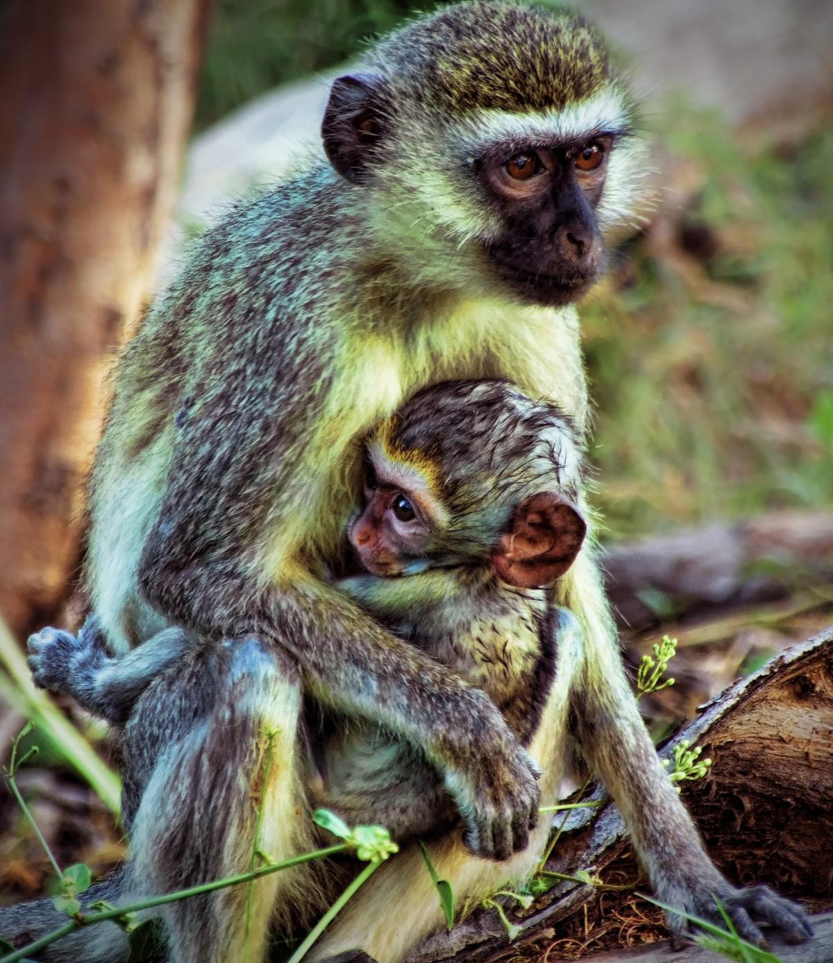 Kostenlose foto : Natur, Tierwelt, Dschungel, Afrika
