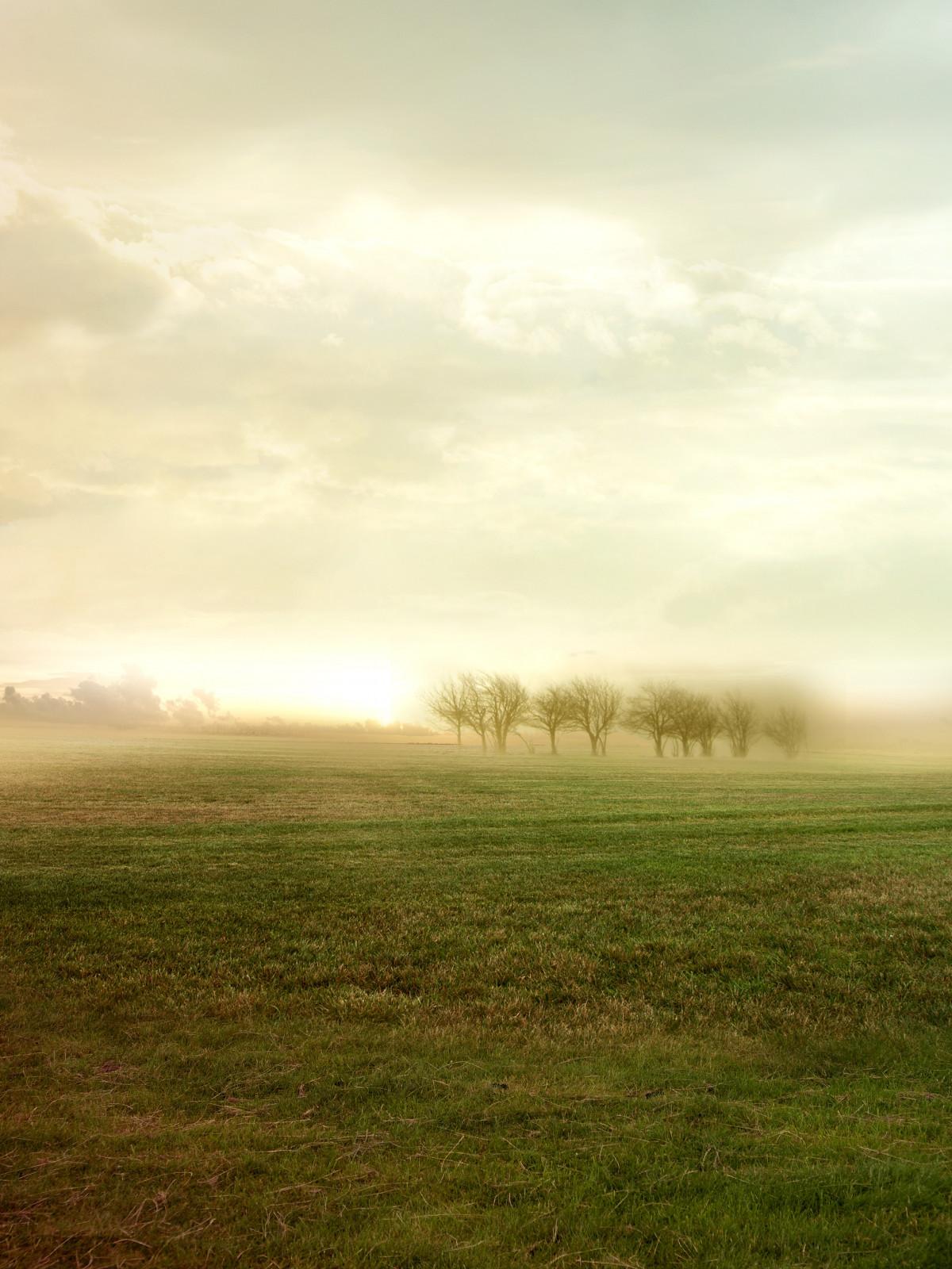 Free Images : tree, horizon, light, cloud, sky, fog ...