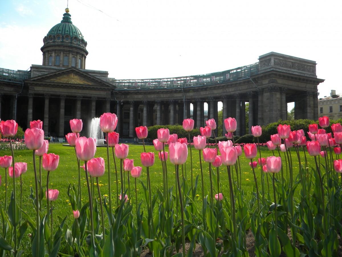 Цветы на улицах санкт-петербурга фото