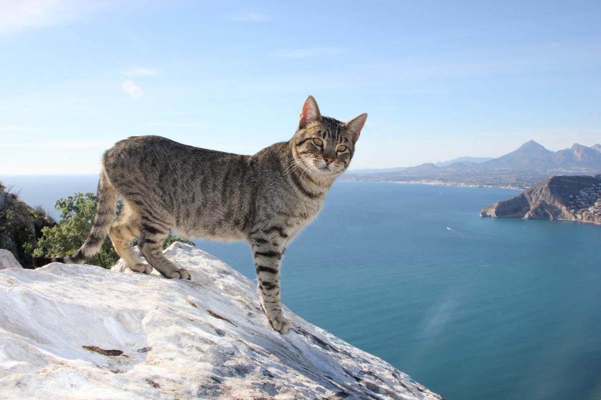 картинки с котами в горах розового одежде для