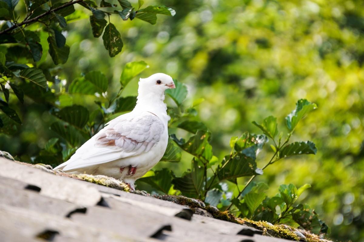 Картинки голуби на природе