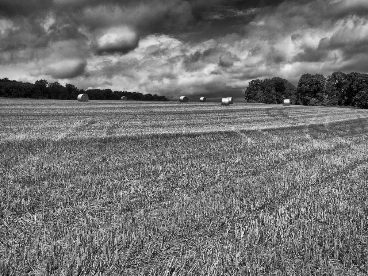 равнины картинки черно-белые обаяние импрессионистов