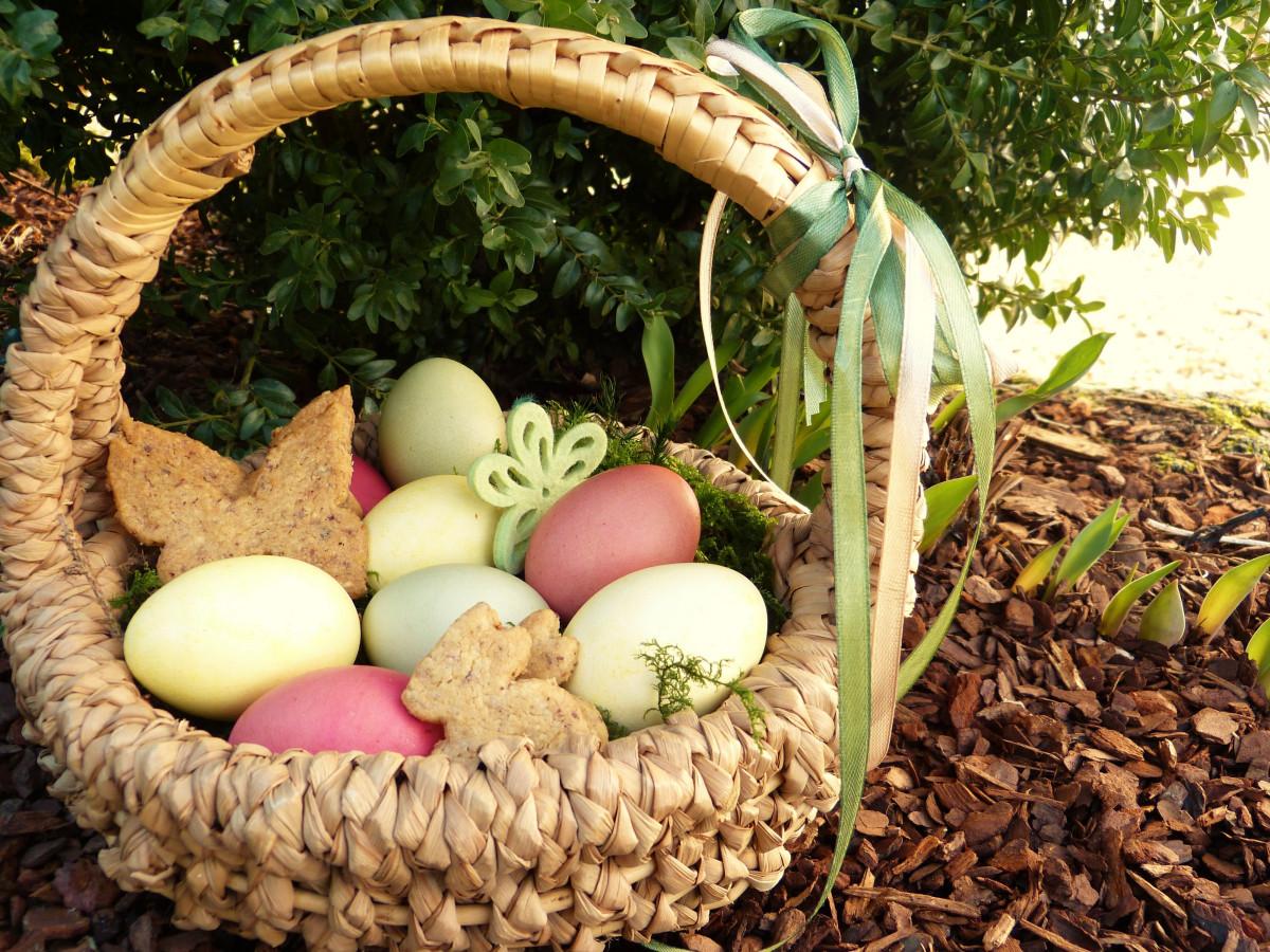 Ei Voor In De Tuin.Gratis Afbeeldingen Natuur Eten De Lente Landbouw Tuin