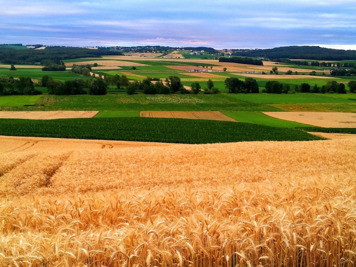 мой красивые картинки сельского хозяйства предоставляем услуги фотопечати