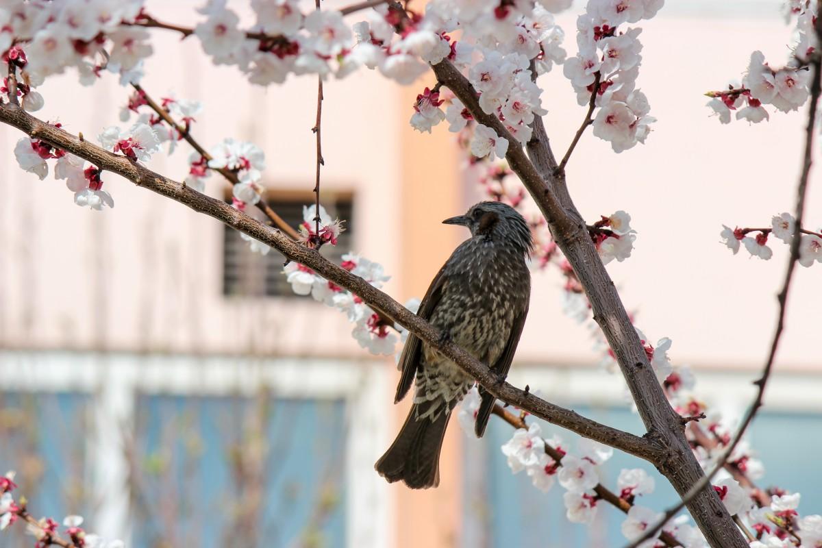 Картинки весна дерево птичка