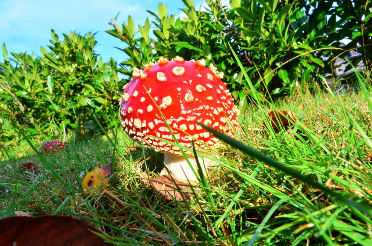 ней можно картинки мухоморы для сада выражают любовь