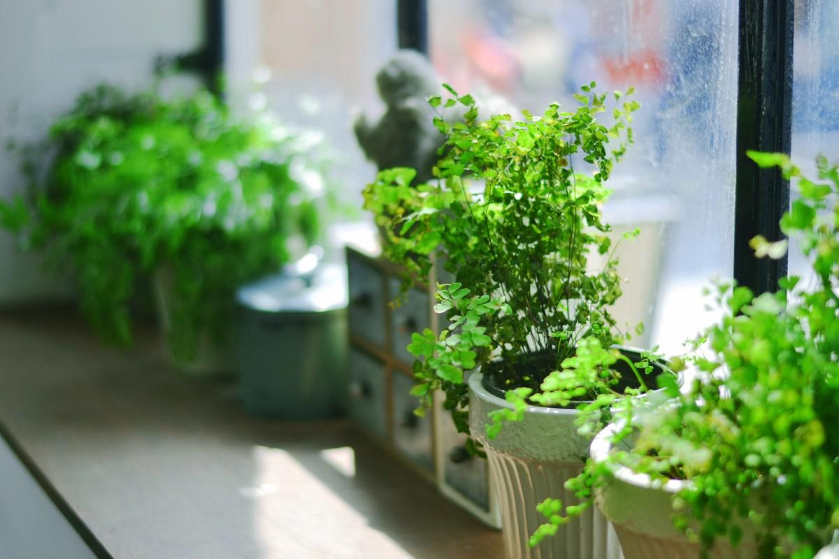 photos de plantes d'appartement