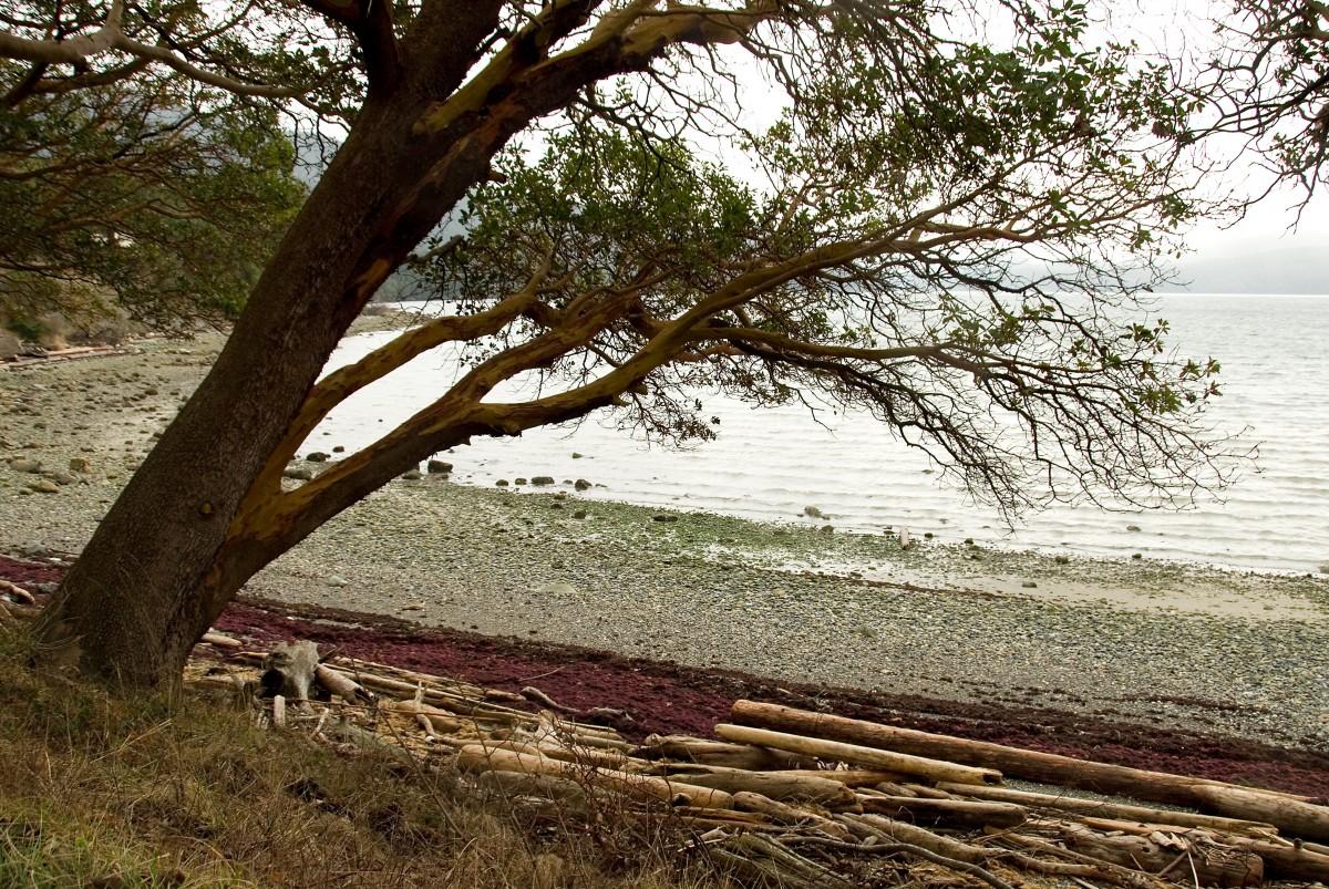images gratuites plage paysage bois flott mer c te arbre eau la nature le sable. Black Bedroom Furniture Sets. Home Design Ideas