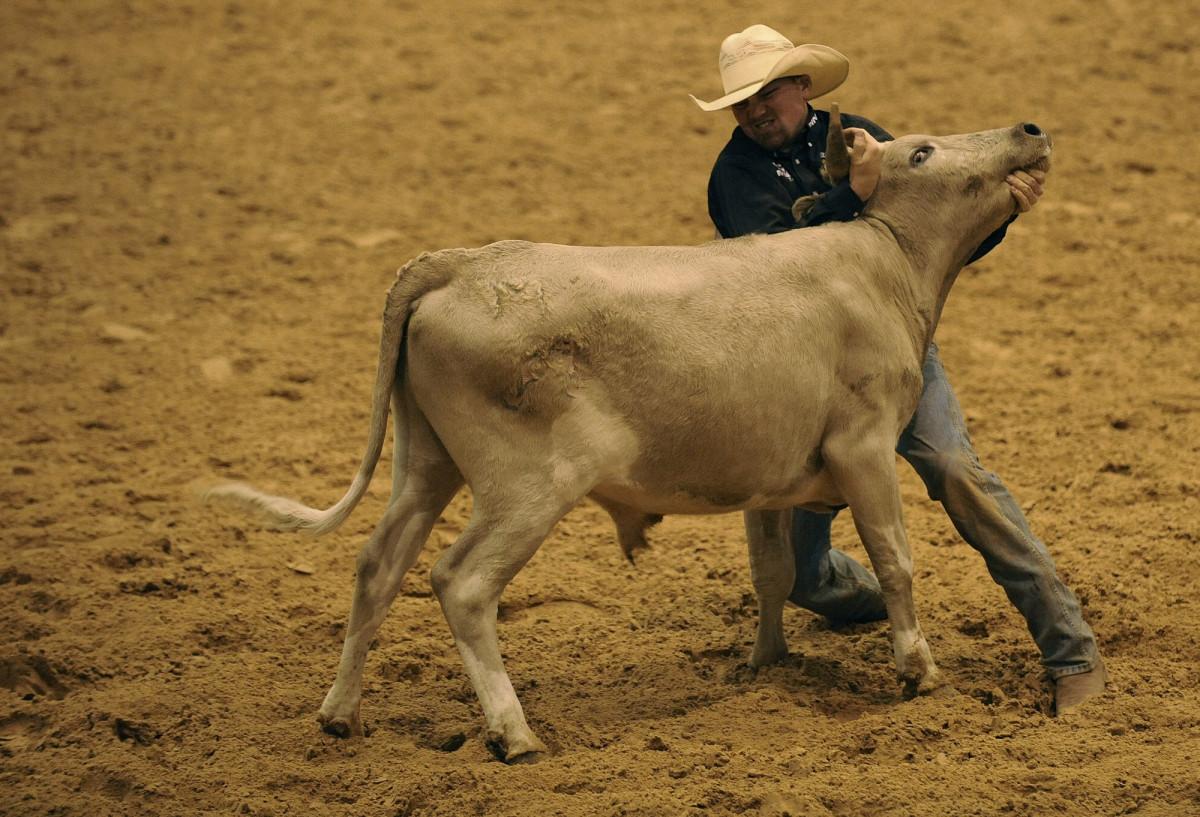 Корова бык конкурсы