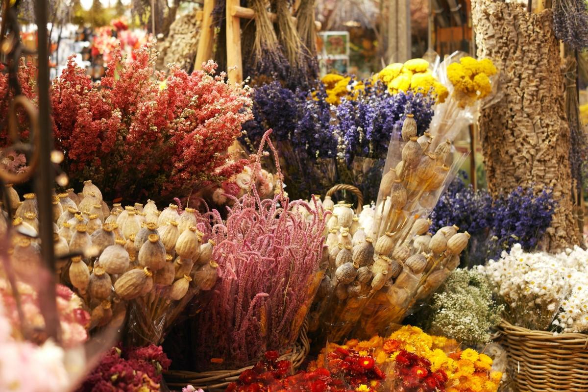 Poze Plantă Floare Buchet Alimente Toamnă Piaţă