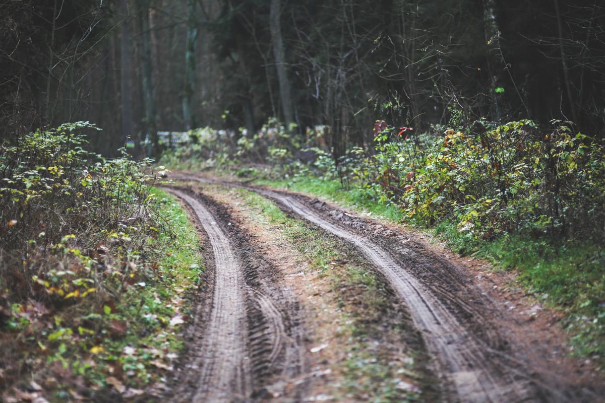 tree path track leaves - photo #7