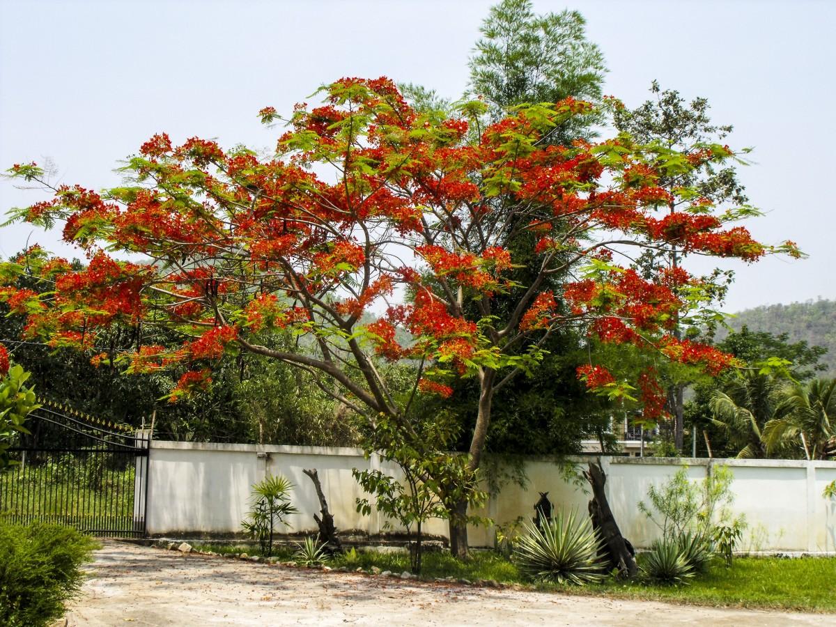 images gratuites arbre feuille fleur rouge l 39 automne botanique jardin saison rable. Black Bedroom Furniture Sets. Home Design Ideas