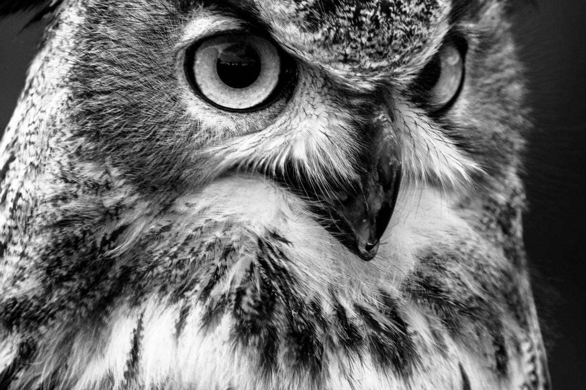 Fotos Gratis : Naturaleza, Pájaro, Ala, En Blanco Y Negro