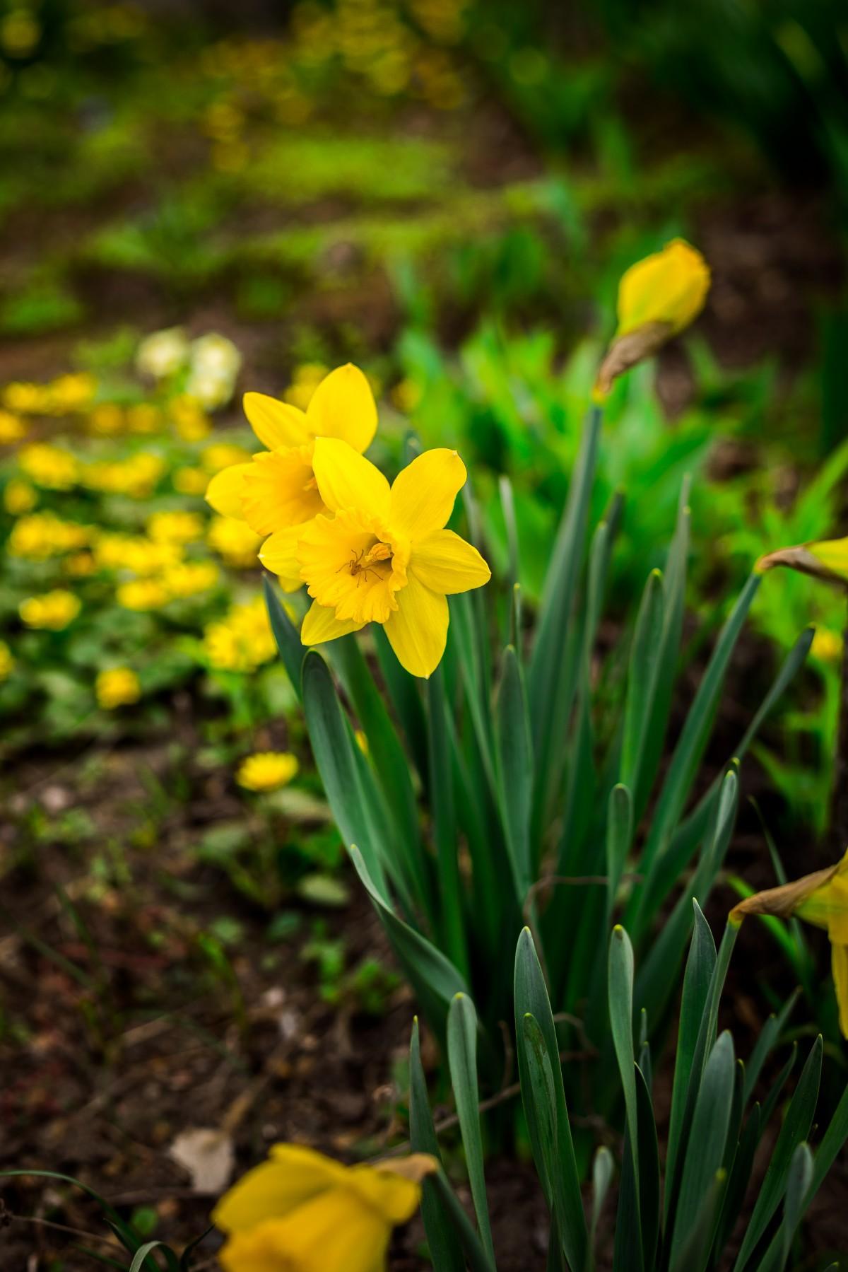 перестаю восхищаться картинки с желтыми цветами них
