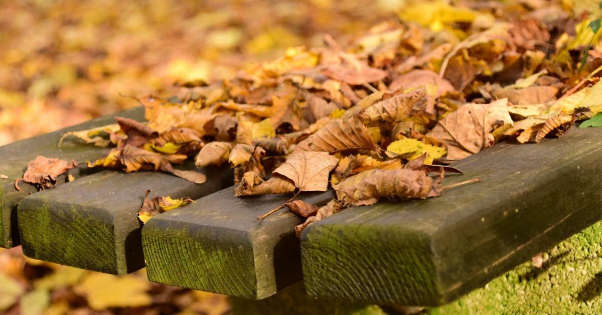 Images gratuites arbre plante feuille fleur produire l 39 automne sol flore saison - Images d automne gratuites ...