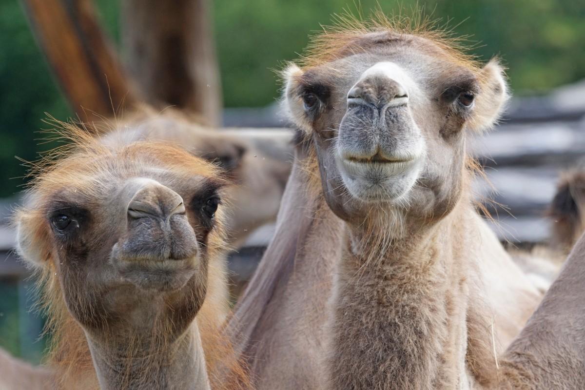 Free Images : grass, animal, summer, wildlife, zoo, fauna ...