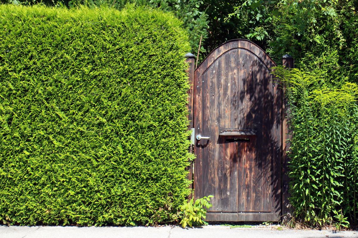 images gratuites arbre herbe cl ture plante pelouse vert objectif porte en bois. Black Bedroom Furniture Sets. Home Design Ideas
