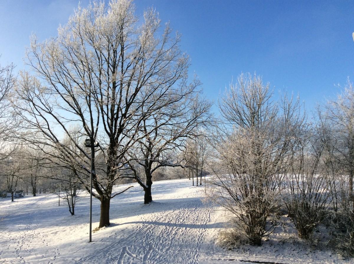 что картинка деревья и кусты зимой информация